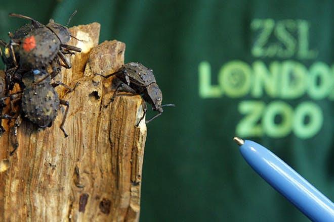 3. ZSL London Zoo