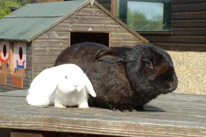 Dwyfor Ranch Rabbit Farm, Ceredigion