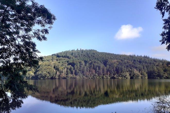 Castlewellan Forest Park, Co Down