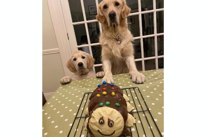 Cake made to look like Colin the Caterpillar with dogs