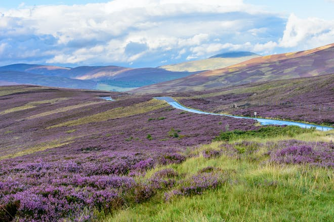 Heather-covered hill in Scotland