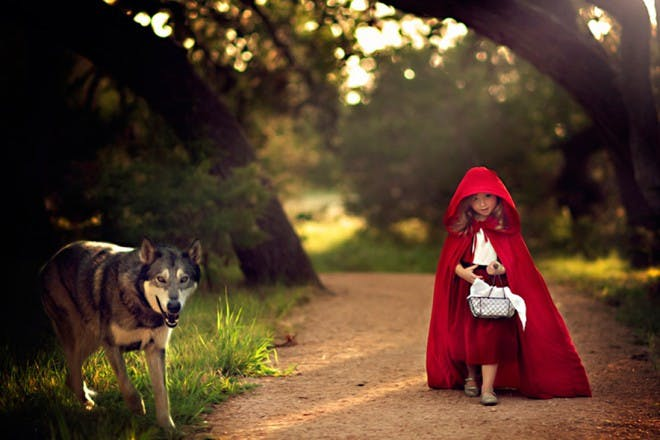 girl in red hooded cape with wolf in forest