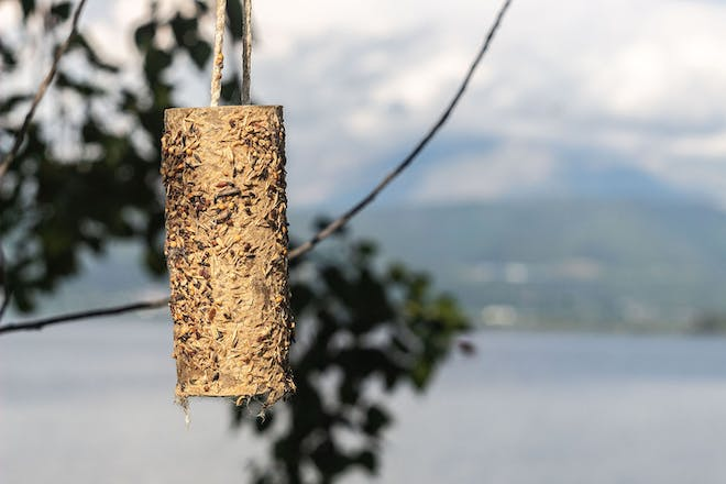 Bird feeder made out of an old toilet roll and seeds