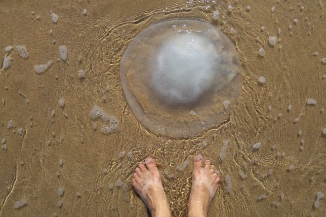 6. FIRST AID MYTH: Urinating on a jellyfish sting stops the pain