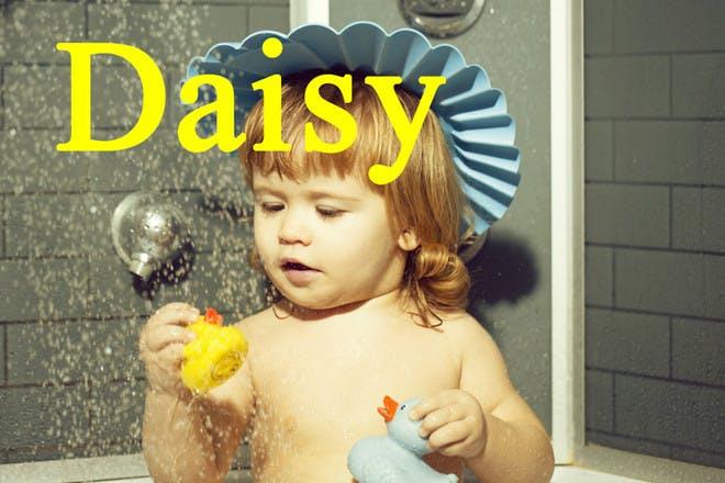 28. Daisy