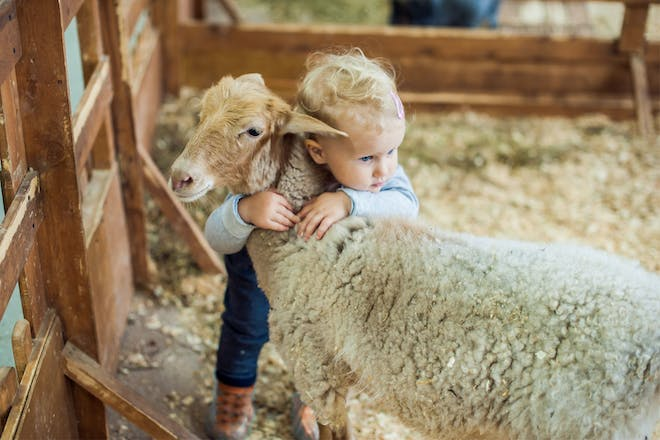 Toddler with baby animal