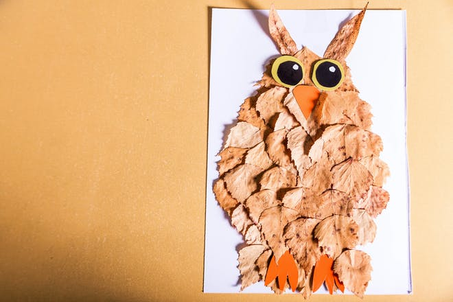 A collage picture of an owl made from autumn leaves