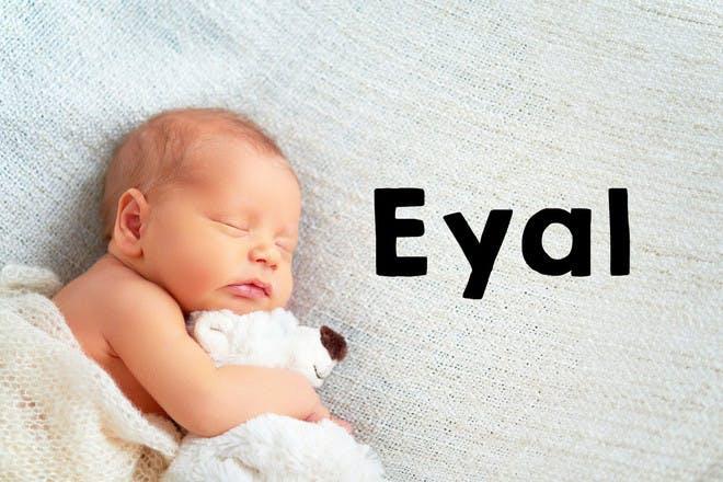 11. Eyal