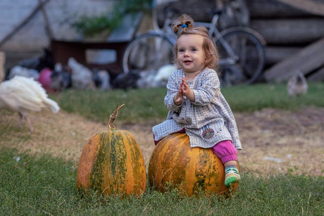 Toddler clapping while sat on Halloween pumpkin