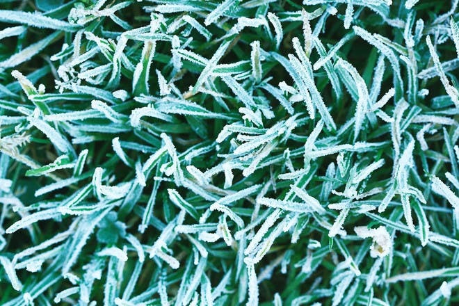 7. Crunch frozen grass underfoot