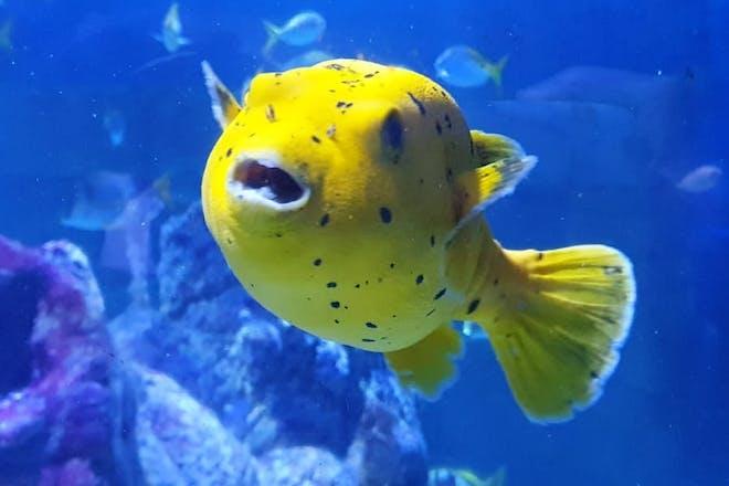 See gorgeous creatures at Tynemouth Aquarium