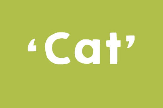 26. Cat