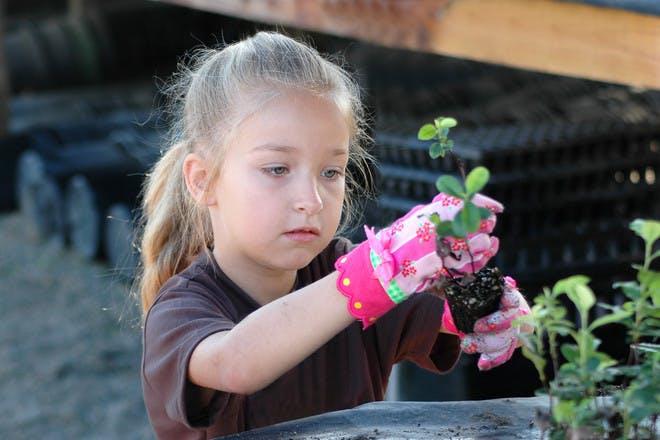 little girl gardening
