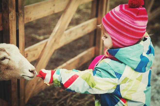 3. A UK farm holiday