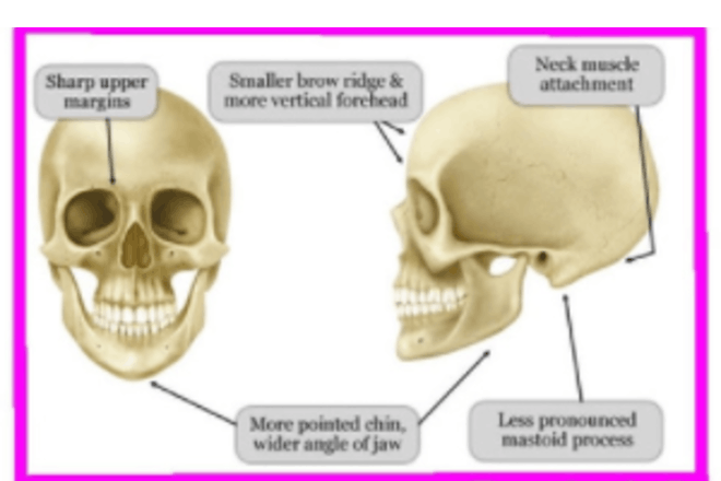 Girl skull theory example