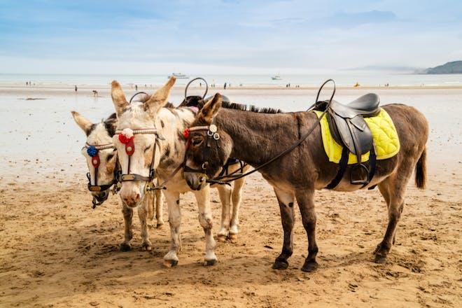 Nostalgic holidays donkey rides on the beach