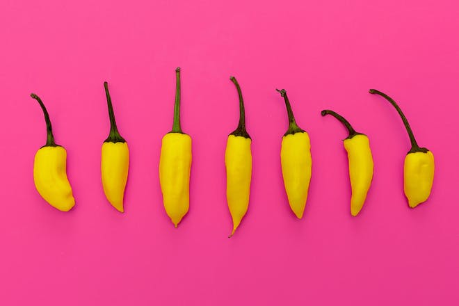 Rw of yellow peppers on bright pink background