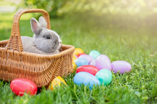 Easter bunny in basket with Easter eggs