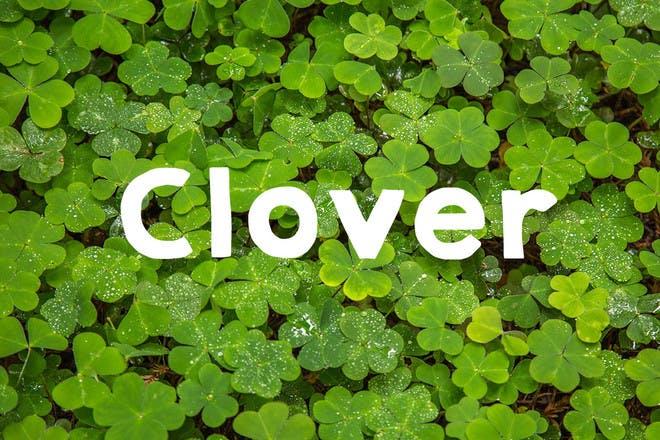 9. Clover