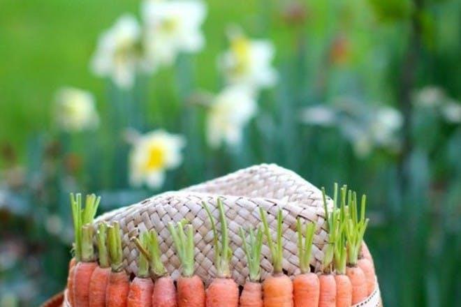 Carrot bonnet