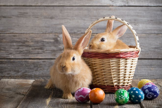 two Easter bunnies in a basket with eggs