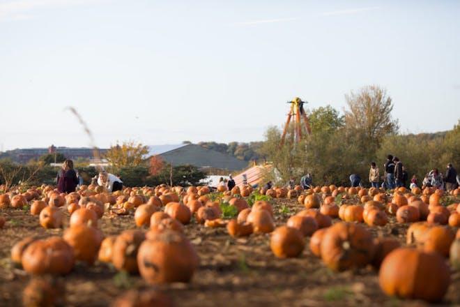The pumpkin field at Avon Valley Adventure and Wildlife Park