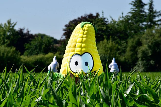 Person in corn on cob costume stand in field of maize