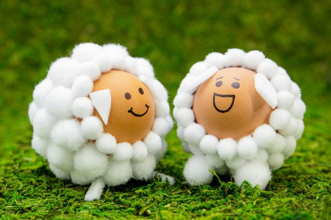 Sheep eggs