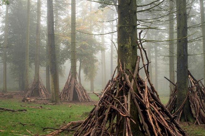 Den made of sticks in the woods
