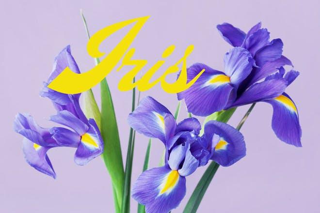 1. Iris