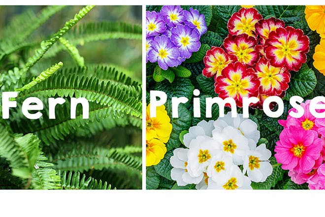 30 plant-inspired baby names