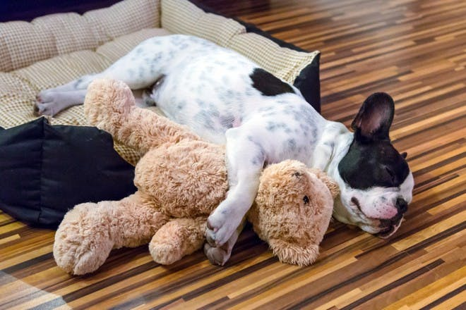 dog in bed with teddy