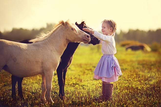 girl and ponies