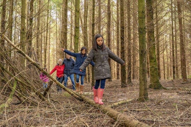 Beechenhurst Forest
