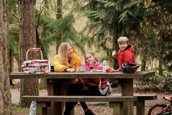 A picnic in Delamere Forest, Cheshire