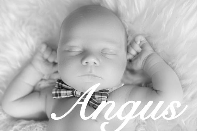 2. Angus