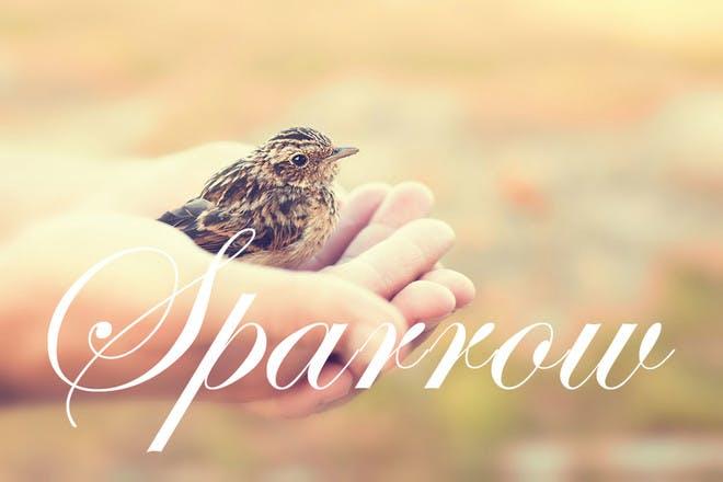 Baby name Sparrow