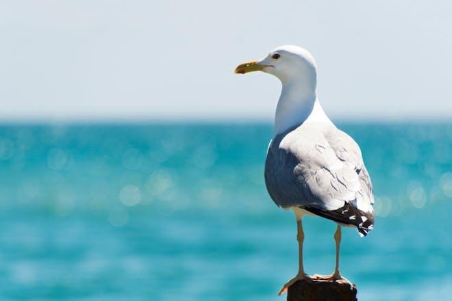 Nostalgic holidays seagulls