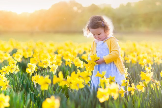 toddler in field of yellow flowers