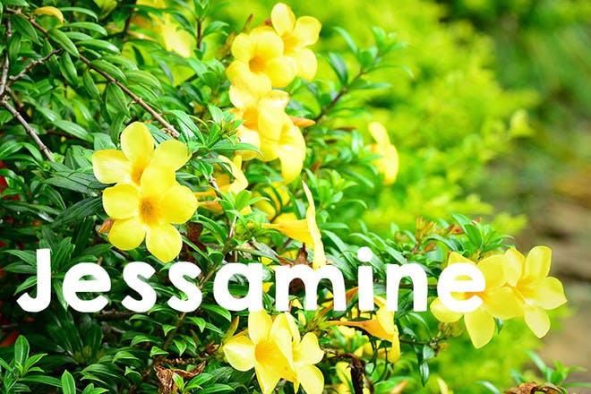 17. Jessamine