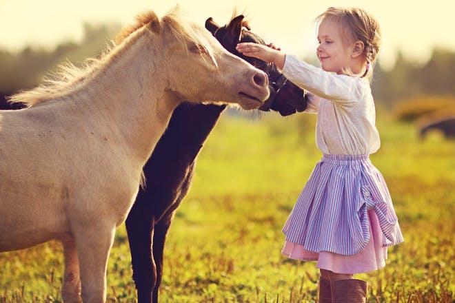 Child petting pony