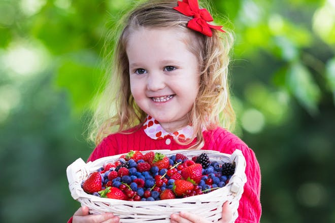 little girl carrying basket of berries