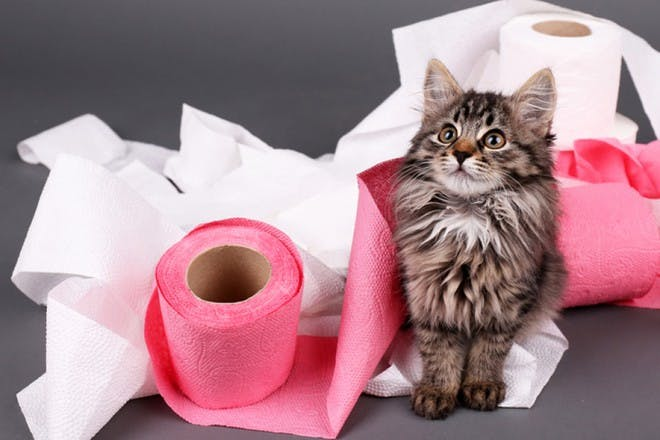 cat with pink and white toilet paper