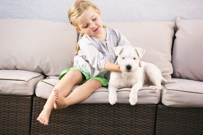 Girl stroking dog
