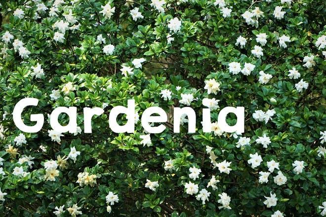 11. Gardenia