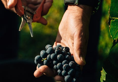 Aid for young winegrowers