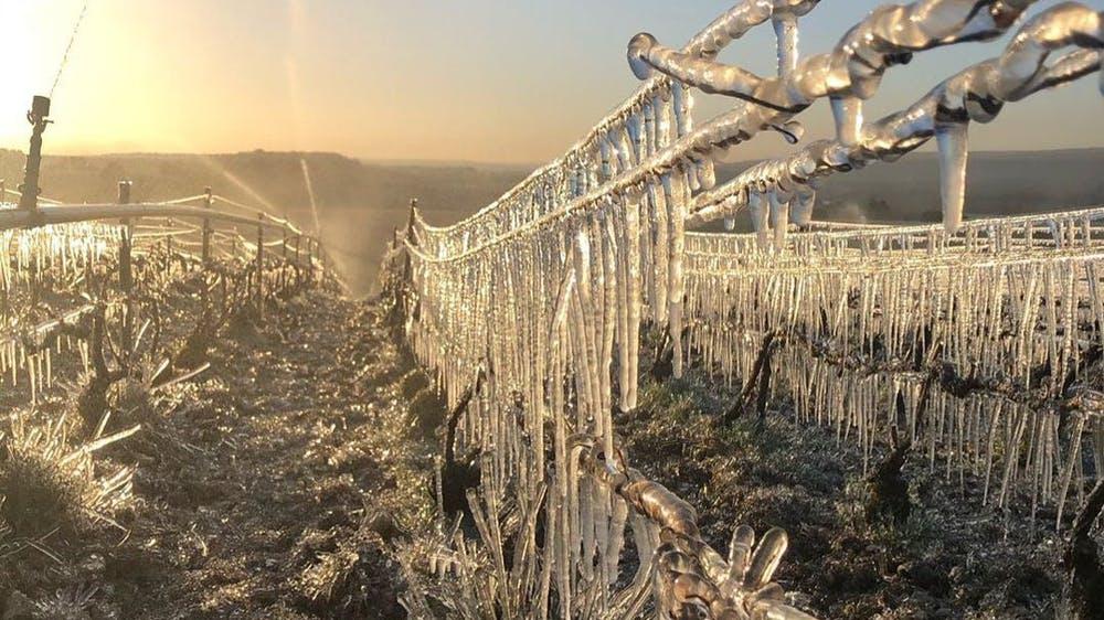 Les gelées printanières
