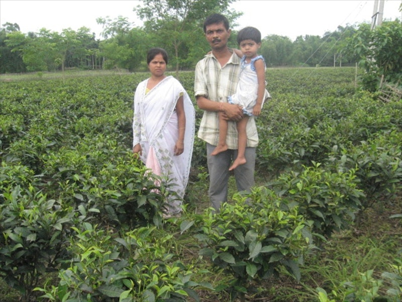 Loan-enabled tea farm