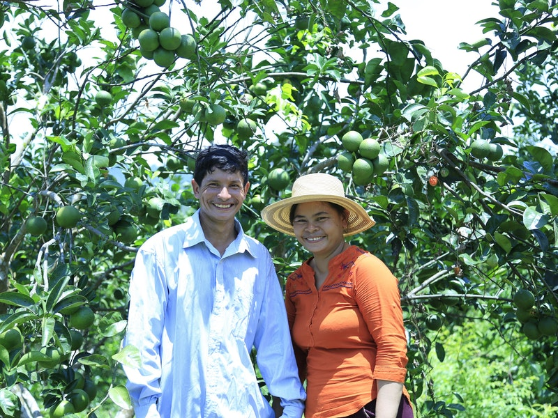 The orange farmer in Pursat province