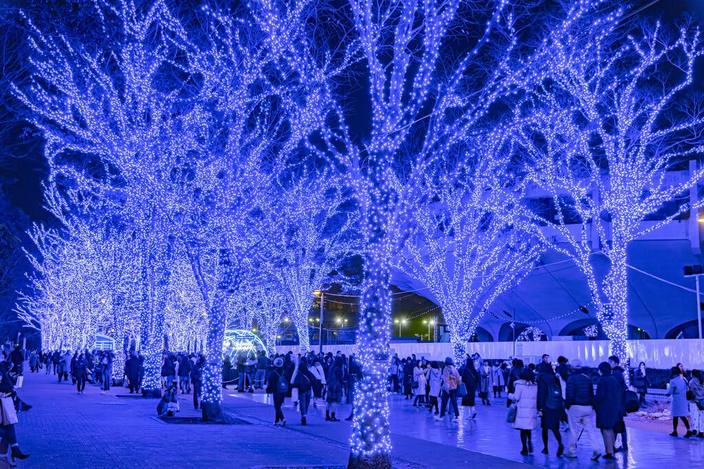 A walking path in Shibuya illuminated with blue lights on trees with many people looking at the lights